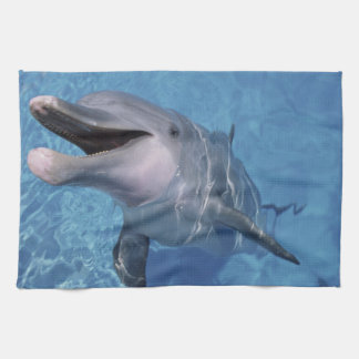 North America, USA, Hawaii. Dolphin 3 Kitchen Towel