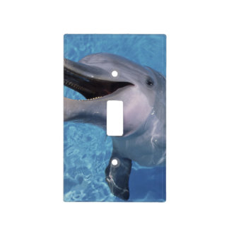 North America, USA, Hawaii. Dolphin 3 Light Switch Cover