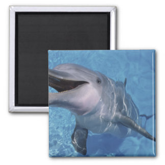 North America, USA, Hawaii. Dolphin 3 Magnet