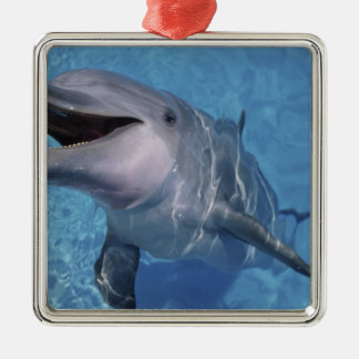 North America, USA, Hawaii. Dolphin 3 Metal Ornament