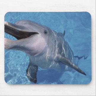North America, USA, Hawaii. Dolphin 3 Mouse Pad