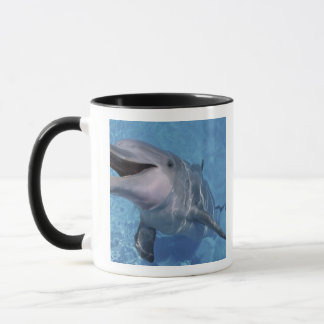 North America, USA, Hawaii. Dolphin 3 Mug
