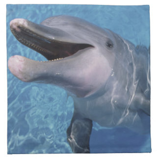 North America, USA, Hawaii. Dolphin 3 Napkin
