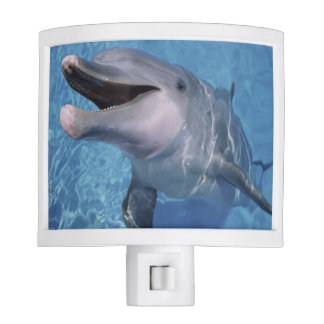 North America, USA, Hawaii. Dolphin 3 Night Light