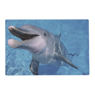 North America, USA, Hawaii. Dolphin 3 Laminated Place Mat
