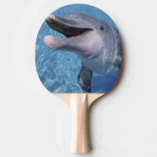 North America, USA, Hawaii. Dolphin 3 Ping-Pong Paddle