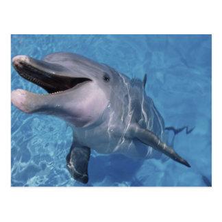 North America, USA, Hawaii. Dolphin 3 Postcard