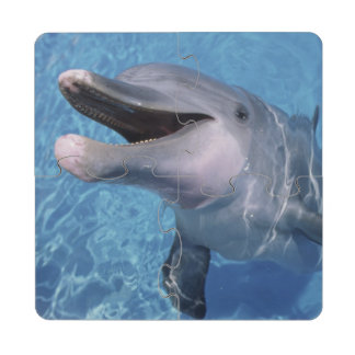 North America, USA, Hawaii. Dolphin 3 Puzzle Coaster