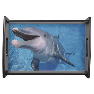 North America, USA, Hawaii. Dolphin 3 Serving Tray