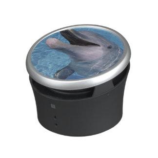 North America, USA, Hawaii. Dolphin 3 Speaker