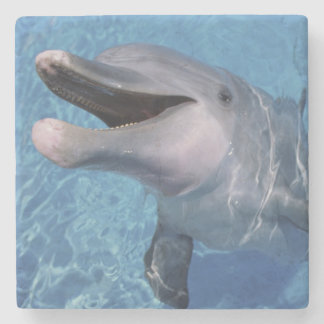 North America, USA, Hawaii. Dolphin 3 Stone Coaster