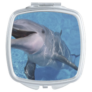 North America, USA, Hawaii. Dolphin 3 Vanity Mirror