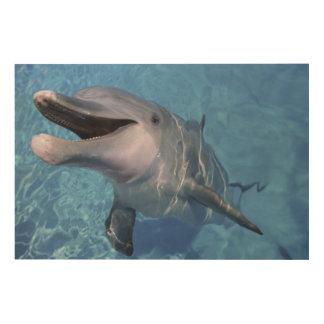 North America, USA, Hawaii. Dolphin 3 Wood Print