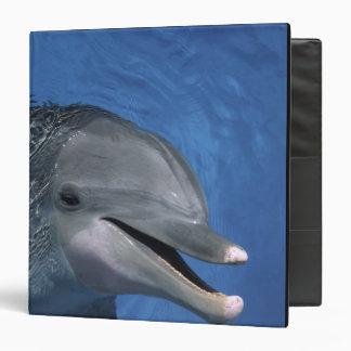 North America, USA, Hawaii. Dolphin Binder