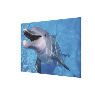 North America, USA, Hawaii. Dolphin Canvas Print