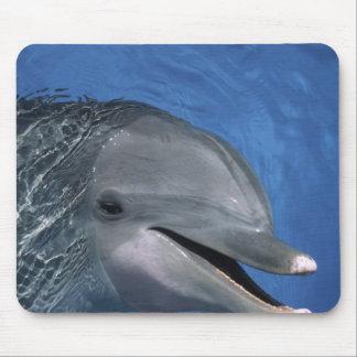 North America, USA, Hawaii. Dolphin Mouse Pad