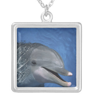 North America, USA, Hawaii. Dolphin Necklace