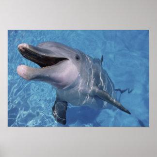 North America, USA, Hawaii. Dolphin Poster