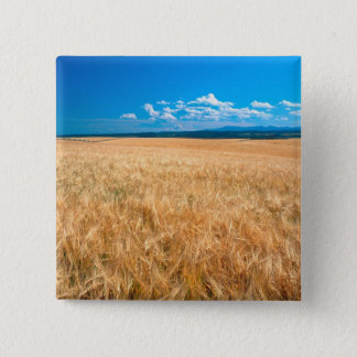 North America, USA, Idaho. Barley field in Button