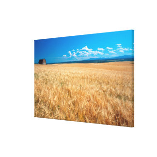 North America, USA, Idaho. Barley field in Canvas Print