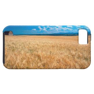 North America, USA, Idaho. Barley field in iPhone SE/5/5s Case