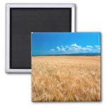 North America, USA, Idaho. Barley field in Magnets