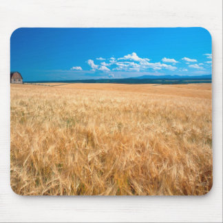 North America, USA, Idaho. Barley field in Mouse Pad