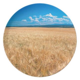 North America, USA, Idaho. Barley field in Plate