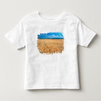North America, USA, Idaho. Barley field in T Shirt