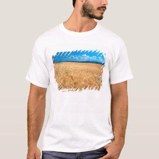 North America, USA, Idaho. Barley field in T-Shirt
