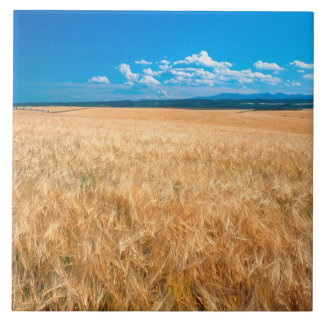 North America, USA, Idaho. Barley field in Tile