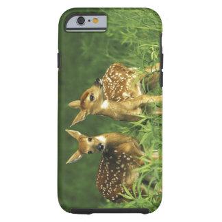North America USA Minnesota White-tailed 2 iPhone 6 Case