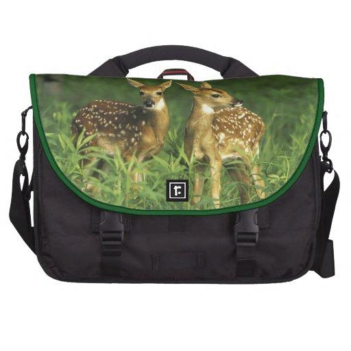 North America, USA, Minnesota. White-tailed 2 Computer Bag