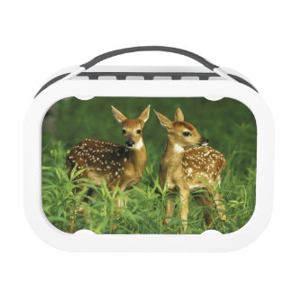 North America USA Minnesota White-tailed 2 Lunchboxes