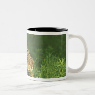 North America USA Minnesota White-tailed 2 Mugs