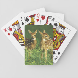 North America, USA, Minnesota. White-tailed 2 Poker Cards