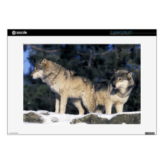 "North America, USA, Minnesota. Wolf Canis 2 15"" Laptop Skins"