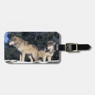 North America, USA, Minnesota. Wolf Canis 2 Luggage Tag