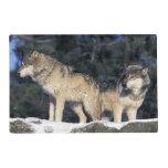 North America, USA, Minnesota. Wolf Canis 2 Laminated Place Mat