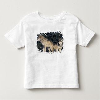 North America, USA, Minnesota. Wolf Canis 2 Toddler T-shirt