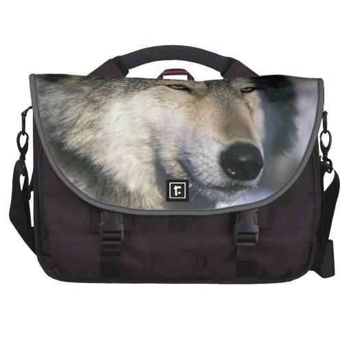 North America, USA, Minnesota. Wolf Canis 3 Laptop Commuter Bag