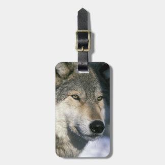 North America, USA, Minnesota. Wolf Canis 3 Luggage Tag