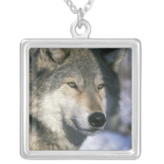 North America, USA, Minnesota. Wolf Canis 3 Necklace