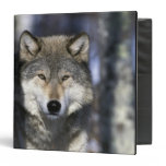North America, USA, Minnesota. Wolf Canis 3 Ring Binders