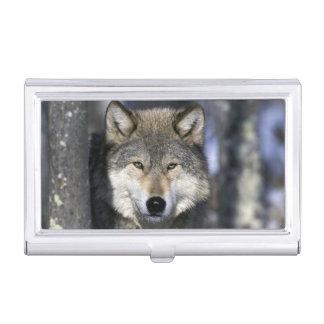 North America, USA, Minnesota. Wolf Canis Business Card Holder