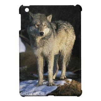 North America, USA, Minnesota. Wolf (Canis iPad Mini Case