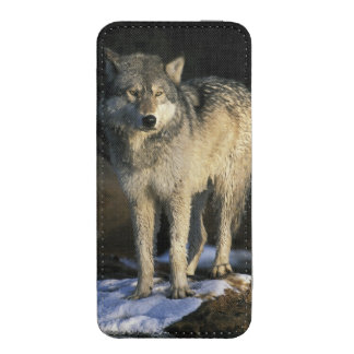 North America, USA, Minnesota. Wolf (Canis iPhone SE/5/5s/5c Pouch