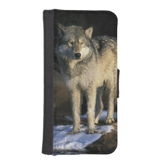 North America, USA, Minnesota. Wolf (Canis iPhone SE/5/5s Wallet