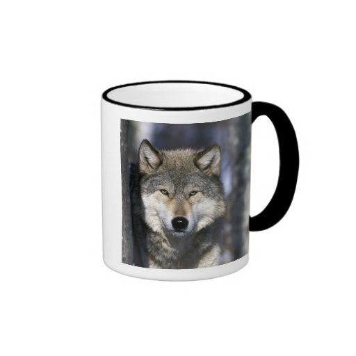 North America, USA, Minnesota. Wolf Canis Ringer Coffee Mug