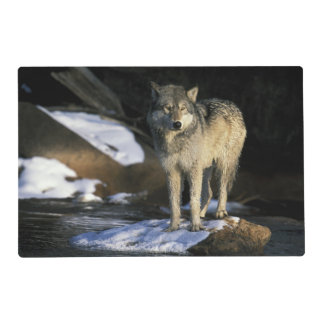 North America, USA, Minnesota. Wolf (Canis Laminated Place Mat